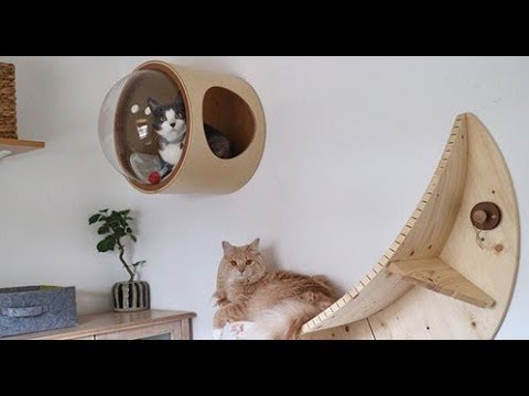 🔴 90 creative ideas for cats and dogs! Furniture and more. 2 and 3 part.