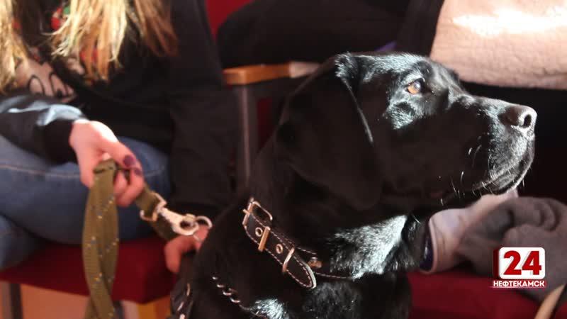Впервые в городе прошел конкурс посвященный собакам поводырям