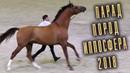 Парад Пород - Разные породы лошадей /Конная выставка Иппосфера 2018 Hipposphere