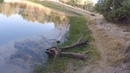 Fishing at Bass Pond in Henry Coe State Park