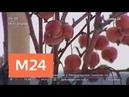 В 2019 году в Москве планируют посадить около 700 тыс деревьев и кустарников Москва 24