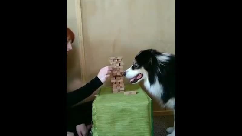 This is secret, she's better at jenga than you
