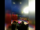Цирк-шапито Феерия 29.09.2018 Псков