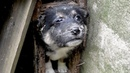 Greatest Dog Rescue Stories Abandoned Puppy Rescue Old House Destroyed Ruins