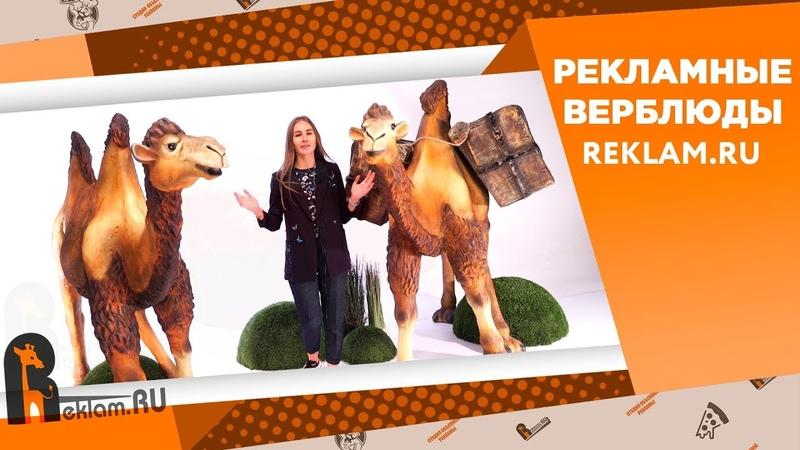 Верблюды от Reklam.ru ✔️ Уличная реклама ✔️