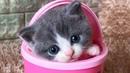 Смешные коты и котики, приколы про котов до слез - Смешные кошки МатроскинТВ 2018