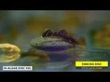 TROPICAL HI-ALGAE DISC XXL - Special food for large bottom-feeding fish