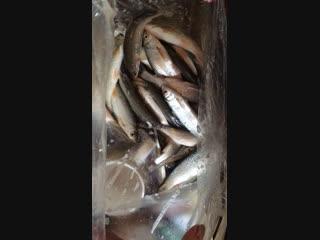 Чудная рыбалка