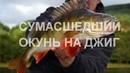ОКУНЬ озверел Нашли точку которая сделала всю рыбалку