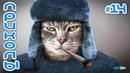 Смешные коты и котики 2019, приколы про котов до слез – Смешные животные