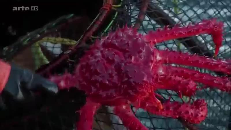 360°-Géo - chili -pecheures de crabe de la terre de feu argentine