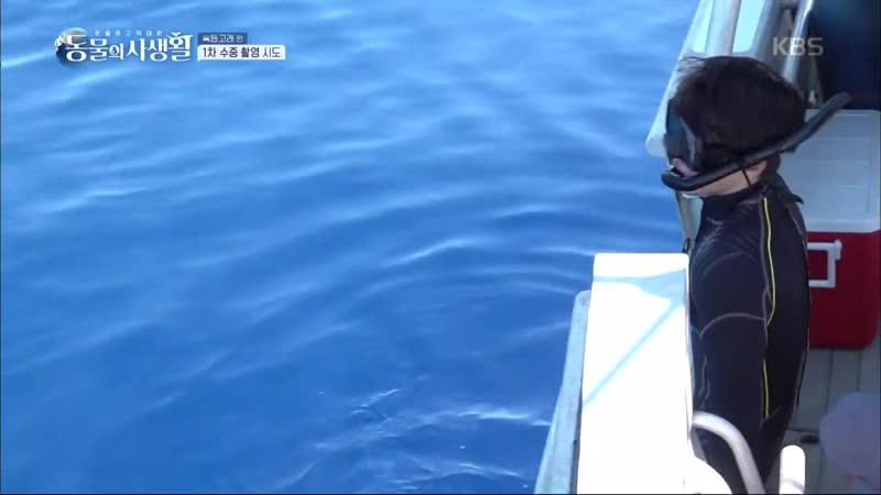 동물의 사생활 - 과연 수중 촬영은 성공할 수 있을지 혹등고래는 어디에.. 20181130