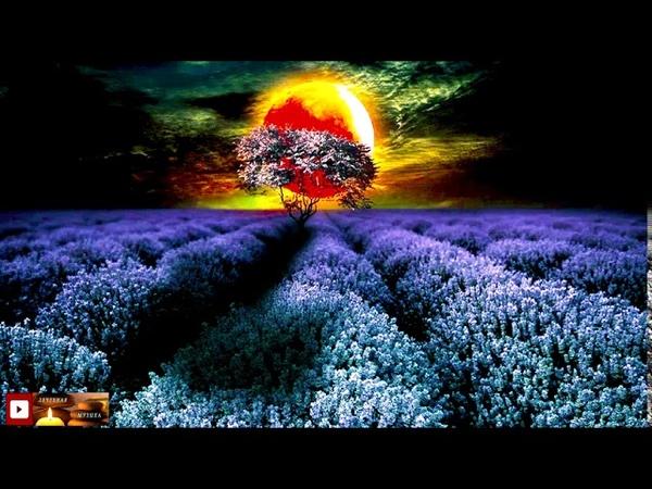 Регенерация Клеток Во Сне 528Гц Самоисцеление и спокойный сон