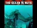 The Ocean is Nuts