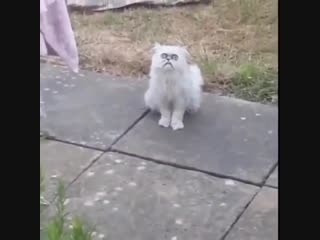 What the fuck is that, is that a fucking cat