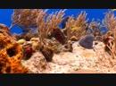 Amazing Coral Reef Creatures 🐠🐟🐬🐳🐋🦈🐙🦑🐢