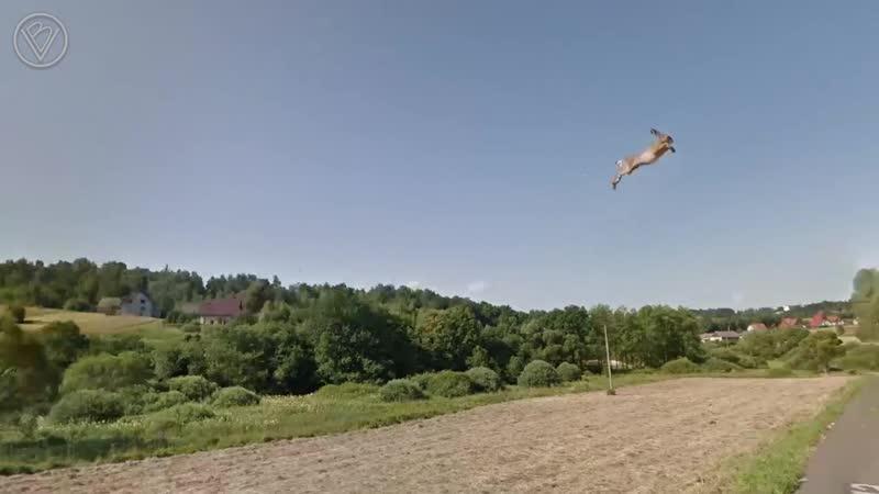 Самый необычный кадр в Google Maps