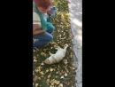 Прогулка по Аксаково. Аксаковский кот