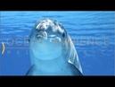 Спокойная Музыка Для Снятия Стресса - RELAXING PIANO - Music - Шум Океана / Stress Relief Music