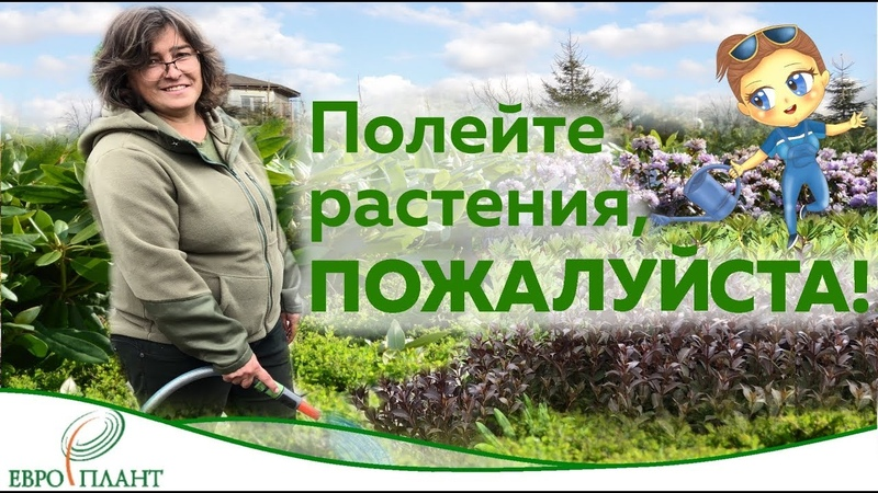 Полейте растения, пожалуйста Вода.Секреты полива. Как и когда поливать растения. Часть 2