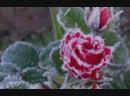 ے Winter poem ے Lament for a Frozen Flower