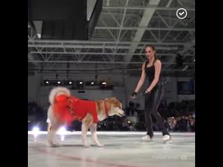 Алина Загитова на льду с собакой