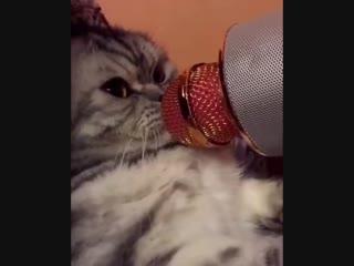 Когда друзья попросили тебя спеть