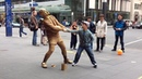 Gold Rugby player Living Statue busker Auckland clip 1