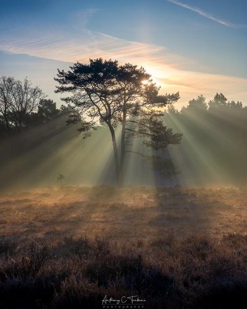 Пронизывающее солнце (Хилверсюм, Нидерланды)