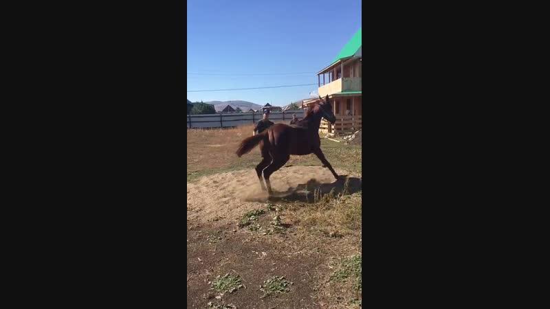 Жаркентте Аламаннан бір келген ат Тренері Сикош