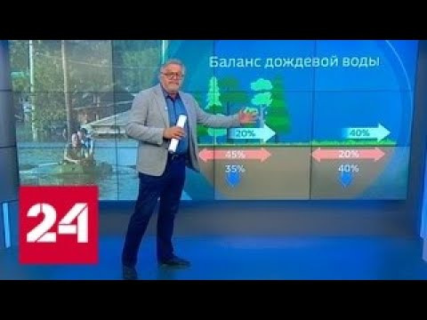 Причиной наводнения в Тулуне могла стать бесконтрольная вырубка лесов - Россия 24