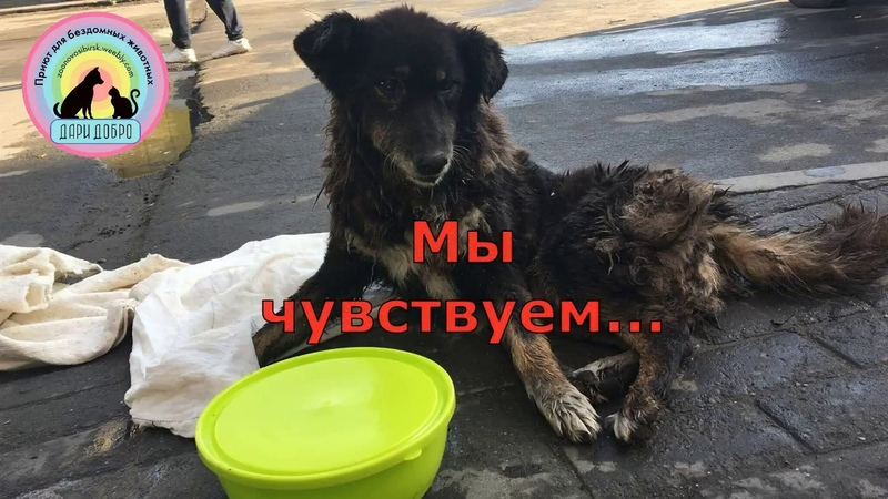 Новосибирцы нашли раненую собаку на остановке Help in saving animals