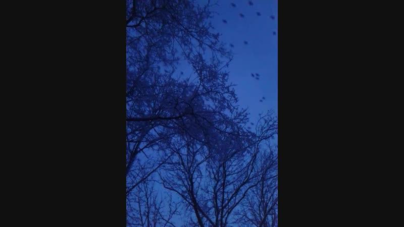 Птичья дорога
