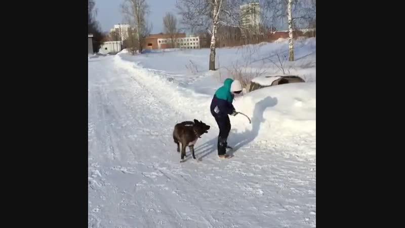 Мы радуемся, когда собакам хорошо.🤗 Когда они здоровы, сыты, в тепле, ухожены, когда они гуляют, общаются с хорошими людьми, ког