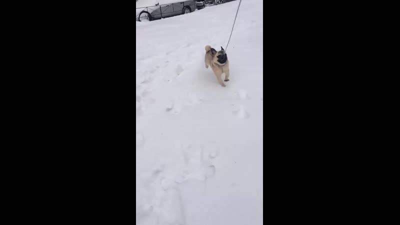 Босик и снег