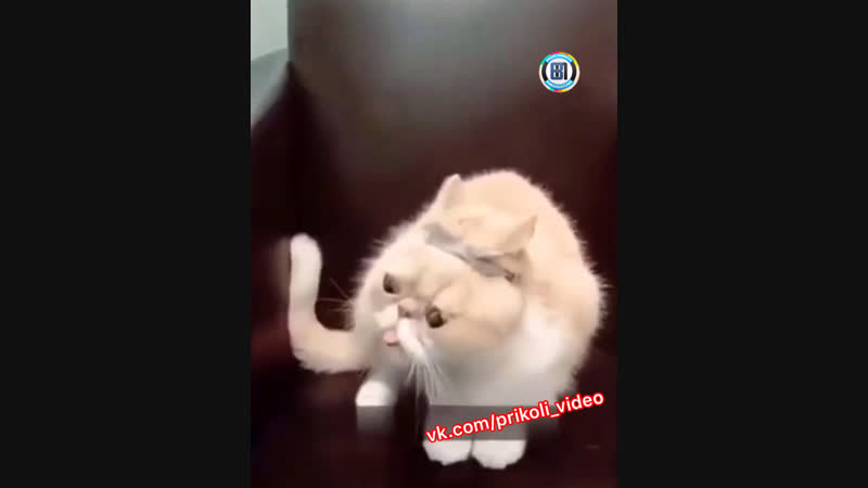 Как сломать кота