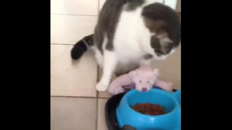 Любимая игрушка тоже проголодалась...😏🤗😜😆😂🤣