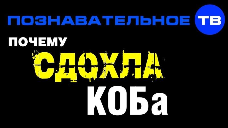 Почему сдохла КОБа? (Познавательное ТВ, Артём Войтенков)
