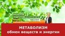 Метаболизм-обмен веществ и энергии.ЕГЭ и ОГЭ по биологии