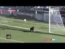 Cachorro salva gol em cima da linha na terceira divisão Argentina