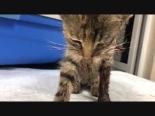 Котенок из подъезда