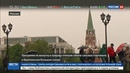 Новости на Россия 24 В Кремле выпустят на волю птенцов сапсана