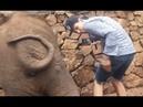 Слонёнок дал пинка