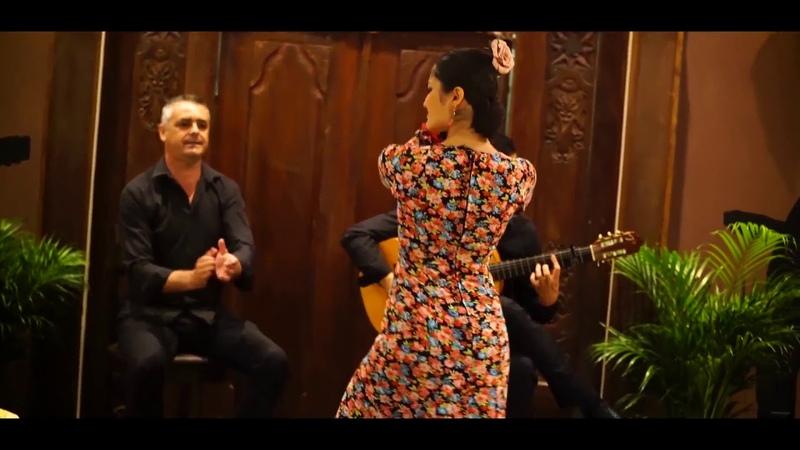 BULERIAS DE CADIZ. Guitarra: Daniel Fernández. Cante: Juan Toro. Baile: Malena Alba