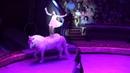 Гала-шоу в Большом цирке / 1 09.09.2018