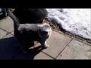 Кот Тимоша первая прогулка после долгой зимы
