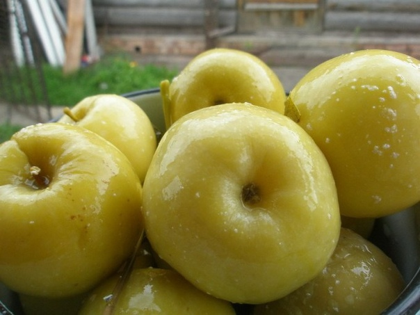 ЯБЛОКИ МОЧЁНЫЕ Крепкие яблоки, желательно поздних зимних сортов сложить в 3-х литровые банки залить холодной водой, насыпать 3 ложки соли, 3 ложки сахара, положить пару лавровых листиков, можно