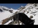 Пёс,ты откуда пришёл!?) ледник Актру