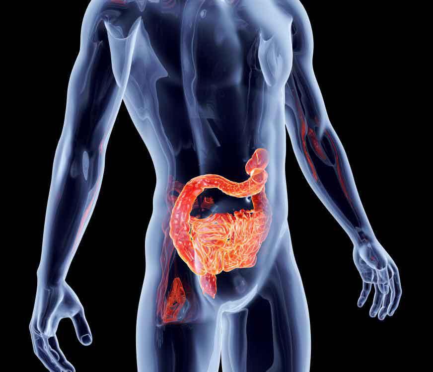 Кишечные бактерии, необходимые для здорового пищеварения, являются основной причиной неприятного запаха.