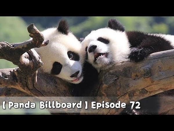 Panda Billboard Episode 72 iPanda